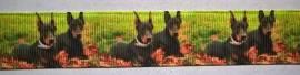 Ripsband Dobermann - Bild vergrößern